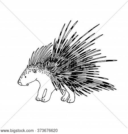 Cute Spiky Porcupine, Rodent Mammal Animal, For Decorations, Ornaments, Logo, Emblem, Vector Illustr