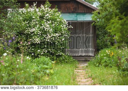 The Porch Of A Wooden Village House Is Covered With A Lace Curtain Next To A Large Jasmine Bush A Gr