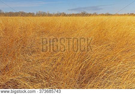 Amidst The Tallgrass Prairie In Midewin National Tallgrass Prairie In Illinois