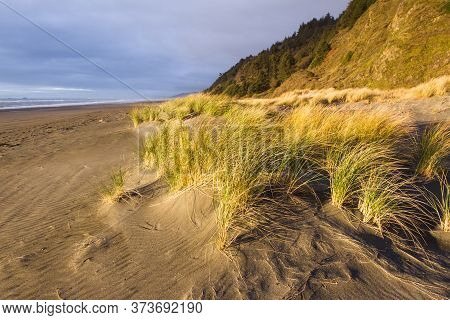 Bright Golden Color On The Dried Grass As The Sun Sets Adding Highlights And Contrast To This Costal