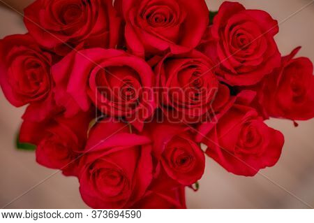 Close Up Of A Bouquet Of Hot Explorer Roses Variety, Studio Shot.