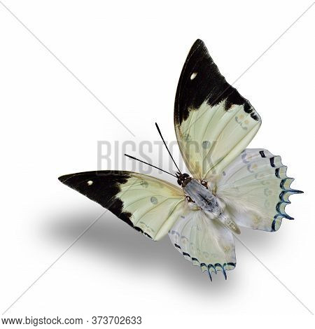 Attractive Flying Pale Green With Orange Dots And Red Spots Butterfly With Soft Shadow Beneath, Jewe