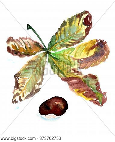 Watercolor Sketch Autumn Green And Brown Chestnut Leaf And Chestnut Fruit On A White Background