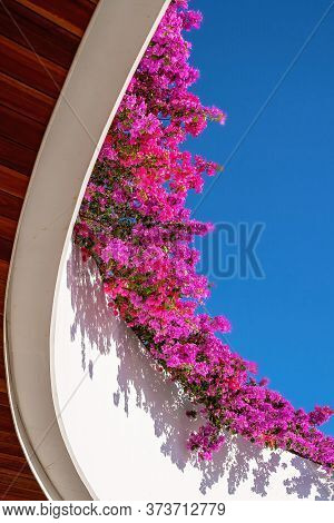 Bright Pink Bougainvillea Cascading Over A Curved Balcony Against A Clear Blue Sky
