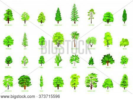 Big Vector Cartoon Set With Trees Isolated