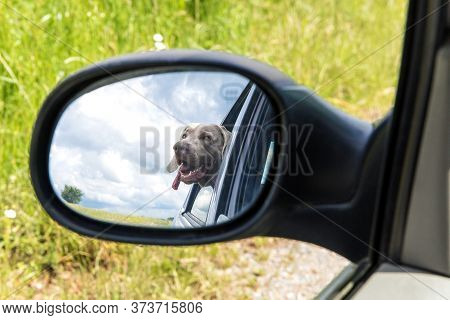 Travel By Car With A Dog. Reflection In The Mirror. View Of The Dog In The Rearview Mirror Of The Ca