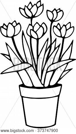 Vector Single Element. Illustration With Flowers Tulips, Flower Pot With Tulips. Floral Doodle.