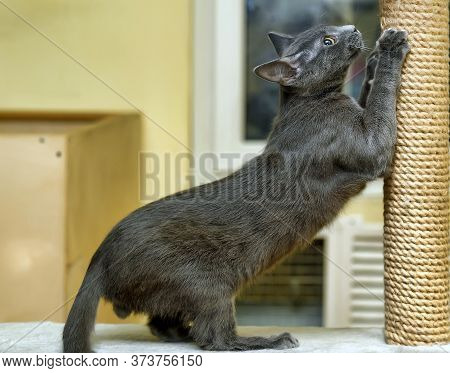 Cute Cat Scratching A Post Close Up