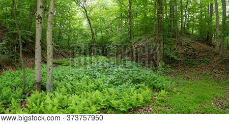 A Panoramic View Of A Fern Filled Creek Bed In Freneau Woods Park In Monmouth County New Jersey.