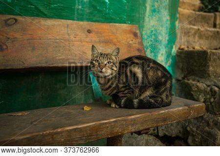 Beautiful Cat Sitting On The Dilapidated Bench By The Abandoned House Asking For Food