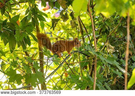 Eichhörnchen Auf Einem Zaun In Einem Garten