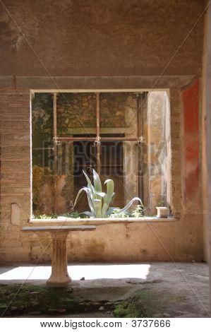Agave In Pompeii