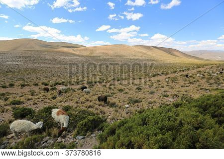 Peruvian Landscape On The Way To Arequipa