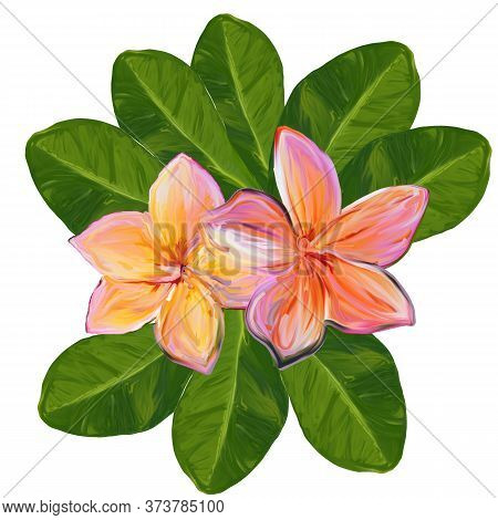 Set Of Plumeria Flowers And Leaves Isolated. Frangipani Plumeria Tropical Flowers. Tropical Floral S