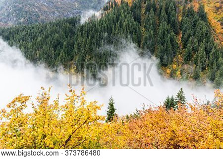 Aerial View Of Pine Woods In Natural Parkland During Autumn Covered By Fog And Cloud.