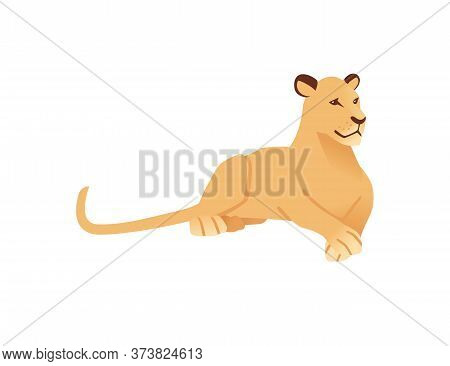 Adult Lioness Lying On The Ground African Wild Predatory Cat Female Lion Cartoon Cute Animal Design