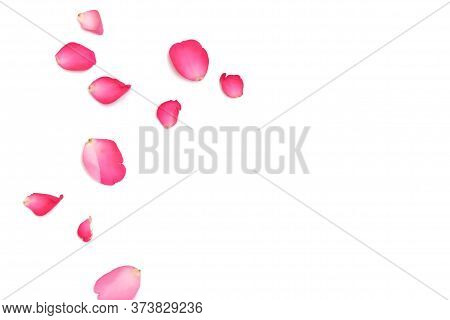 In Selective Focus A Group Of Sweet Pink Rose Corollas On White Isolated Background With Softly Styl