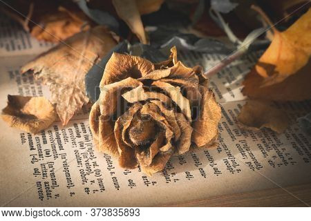 A Wilted Orange Rose Lying On Top Of An Old Book Page Surrounded By Dying Leaves. Golden And Orange