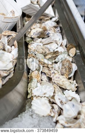 Discarded Oyster Shells At An Oyster Stall.