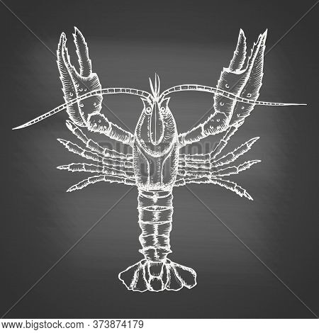 Crayfish - Chalk Drawing On The Blackboard. Hand Drawn Sketch In Vintage Engraving Style. Vector Ill