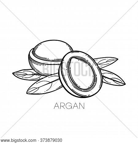 Two Graphic Argan Fruits Decorated With Leaves
