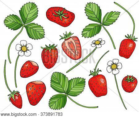 Strawberry Collection. Hand Drawn Sweet Red Berries, Strawberry Flowers And Leaves On White Backgrou
