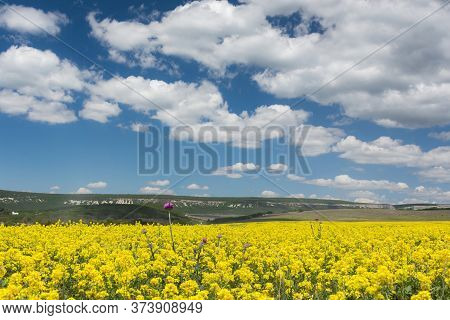 Rapeseed Field On A Bright Sunny Day. Summer Landscape With Yellow Flowers. Growing An Agricultural