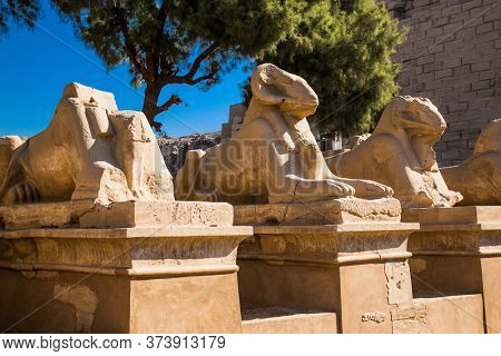 Row of ancient sculptures of criosphinx in Karnak Temple , Luxor (Thebes), Egypt. The largest temple complex of antiquity in the world. UNESCO World Heritage.