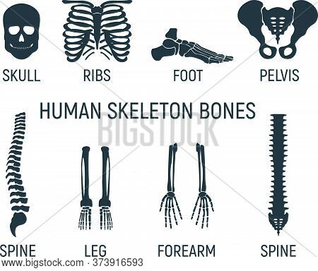 Set Of Bone, Chest X-ray Concept Icon, Roentgen Human Body Image Isolated On White, Flat Vector Illu