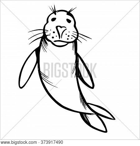 Fur Seal Black Line Sketch On White Background. Swimming Sea Lion Cub.
