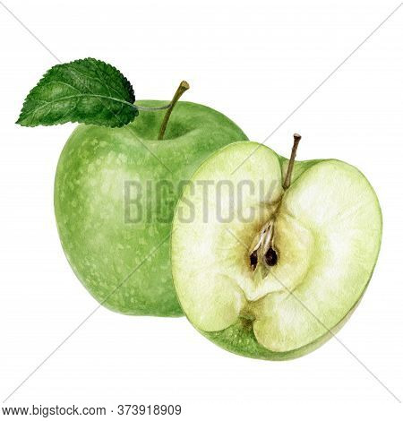 Granny Smith Green Apple Watercolor Illustration Isolated On White Background
