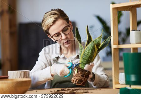 Portrait Of Modern Young Woman Potting Plants While Enjoying Home Gardening Indoors, Copy Space