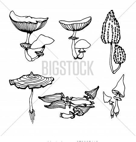 Set Of A Forest Poisonous Fungus, Toadstool, Ingredient For Magical Antidote, Potions, Medical Drugs