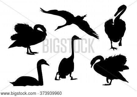 Set Of Black Swans Silhouette Isolated On White Background. Collection Of Different Shape Swans In A