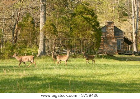 Field Of Deer