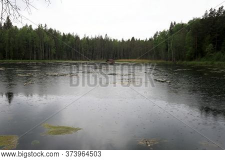 View Of Forest Lake
