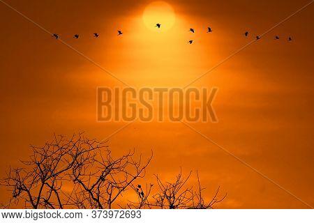 Sunset Back On Silhouette Dry Tree Dark Orange Cloud On The Sky And Birds