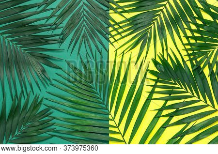 Tropical Background. Palm Leaves On Bright Yellow Green Background. Flat Lay, Top View, Copy Space.