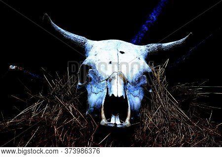 Animal Skull, Symbol Of Pagan Faith In The Deep Past Of Humanity, Faith, Religion, Polytheism, Emoti