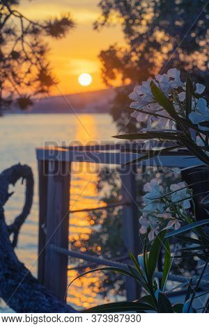 Romantic View Of Blossoming Nerium Oleander On Terrace Overlooking Adriatic Sea In Croatia And Beaut