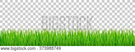 Green Grass On Spring Lawn Or Field. Vector Realistic Border Of Summer Meadow Plants Isolated On Tra