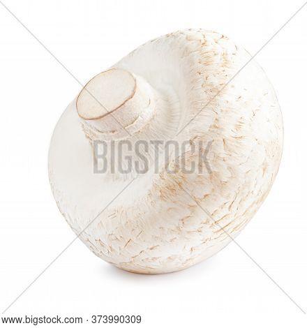 Fresh Champignon Mushrooms Isolated On White Background. Organic Champignon Close Up