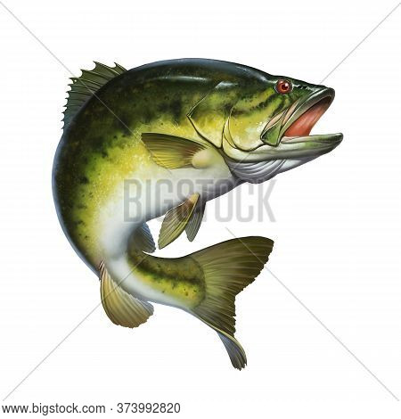 Larged Bass Jumps Out Of Water Isolate Realistic Illustration. Big Bass Perch Fishing In The Usa On