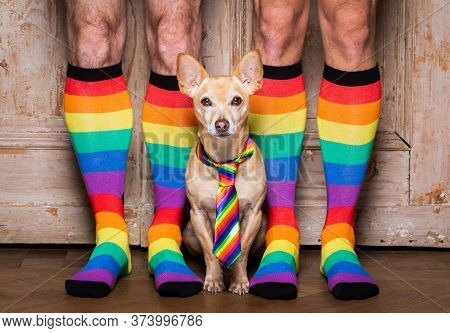 Funny Gay Homosexual  Chihuahua Dog Proud Of Human Rights ,sitting And Waiting, With Rainbow Flag Ti