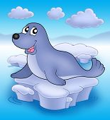 Cute seal on small iceberg - color illustration. poster