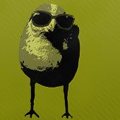 Cool bird with sunglasses and an attitude poster