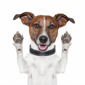 hello goodbye high five dog  and looking to front poster