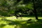 Beautiful green wildlife landscape with a horse stallion poster