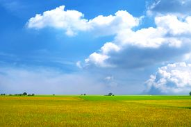 Agriculture Jasmine Rice Field And Soft Fog In The Morning Blue Sky White Cloud