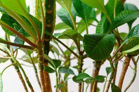Indoor Plant Euphorbia Close-up. Succulent Plant. Horizontal Orientation